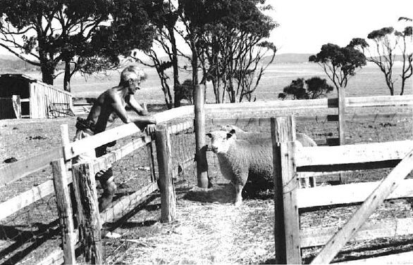 George Dibbern communing with his sheep